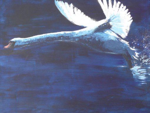 opstijgende zwaan